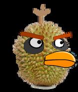 Durian Bird