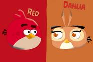 Angry Birds - Red X Dahlia
