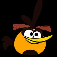 Orangebird4