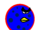 Blue Berry Terence