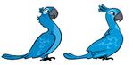 Rio Birds.png
