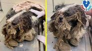 Rescue Poor Dog Was Dumped On The Streets By a Breeder