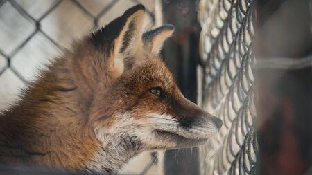 Fur Industry.jpg