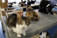 ASPCA PA Cats June24 2010-004551
