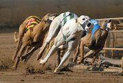 Greyhound Racing.jpg