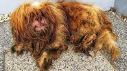 Rescue of a Heartbroken & Sick Dog Lose Hope and Had Given Up Hope Gets Recover