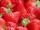 StrawberryClan