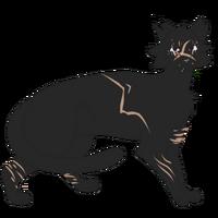 611-cat