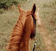 Gonna take my horse to the old town road.jpg