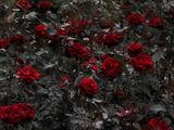 RoseClan
