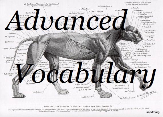 Advanced Vocabulary