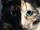 Chemara Tortoise Cat.png