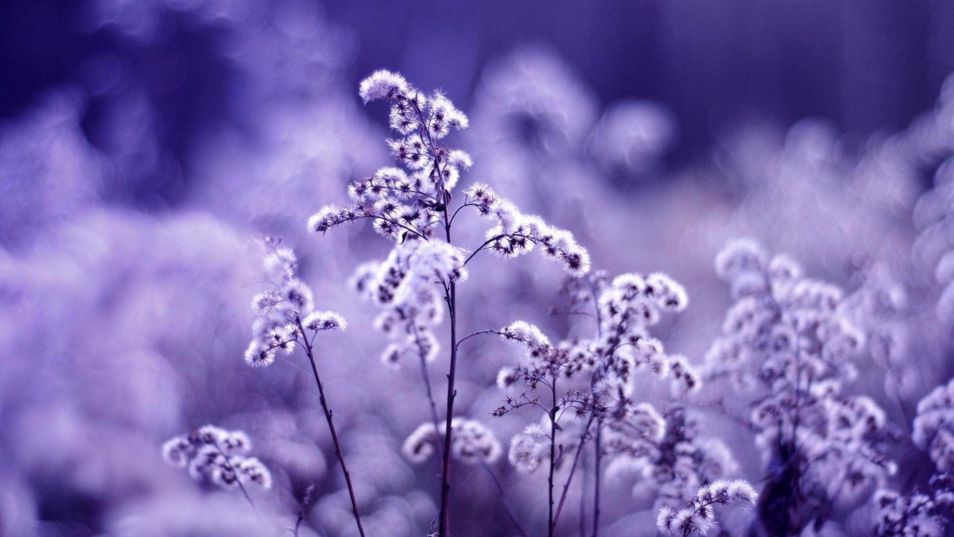 VioletClan (livvydoodle)
