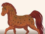 Jasper the Arabian Horse
