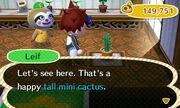 Tall mini cacus leif gardening store
