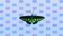 RajaBrookeButterfly.png
