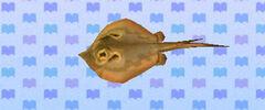 Ray (New Leaf crop).jpg