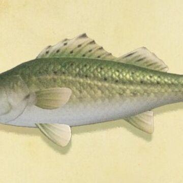 Sea Bass Animal Crossing Wiki Fandom Welcome to olive garden italian restaurants. sea bass animal crossing wiki fandom
