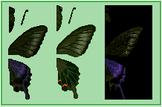 Peacock Butterfly (City Folk texture design)
