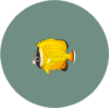 Butterflyfish2.png