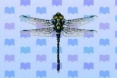 Petaltail dragonfly