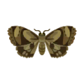 120px-Insect ga