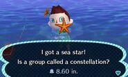 HNI 0095 sea star