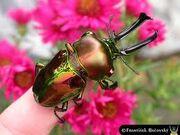 ImagesCA6K35I9 rainbow stag.jpg