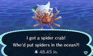 SpiderCrab