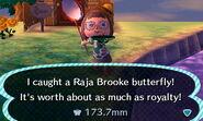 Raja Brooke caught NL