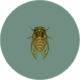 Evening Cicada (City Folk).png
