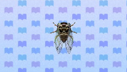 GiantCicadaNL.png