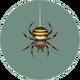 Spider (City Folk).png
