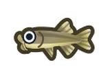 溫泉醫生魚