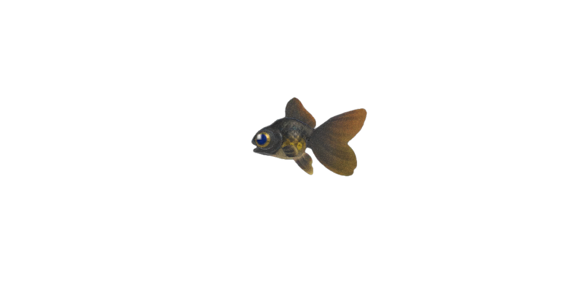 Pop-eyed goldfish