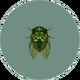 Robust Cicada (City Folk).png