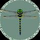 Banded Dragonfly (City Folk).png