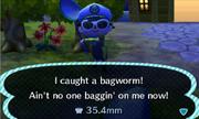 NL-BagwormCatch1