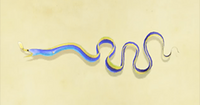 Ribbon the eel.png