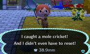 Mole Cricket Caught