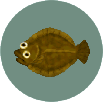 Olive Flounder Animal Crossing Wiki Fandom Community for animal crossing new horizons on the nintendo switch. olive flounder animal crossing wiki