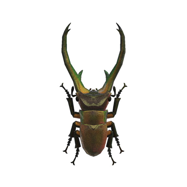 Cyclommatus stag