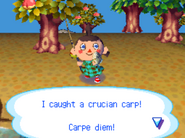 Catchingthecarp