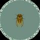 Walker Cicada (City Folk).png