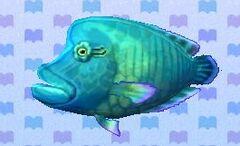 Napoleonfish encyclopedia (New Leaf).jpg