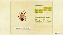 NH-encyclopedia-Man-faced stink bug.jpg