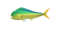 NH-fish-Mahimahi.png