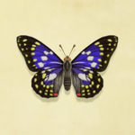 NH-Great Purple Emperor.png