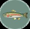 Rainbow Trout (City Folk).png