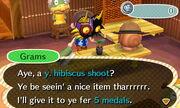 Y. hibisucs shoot